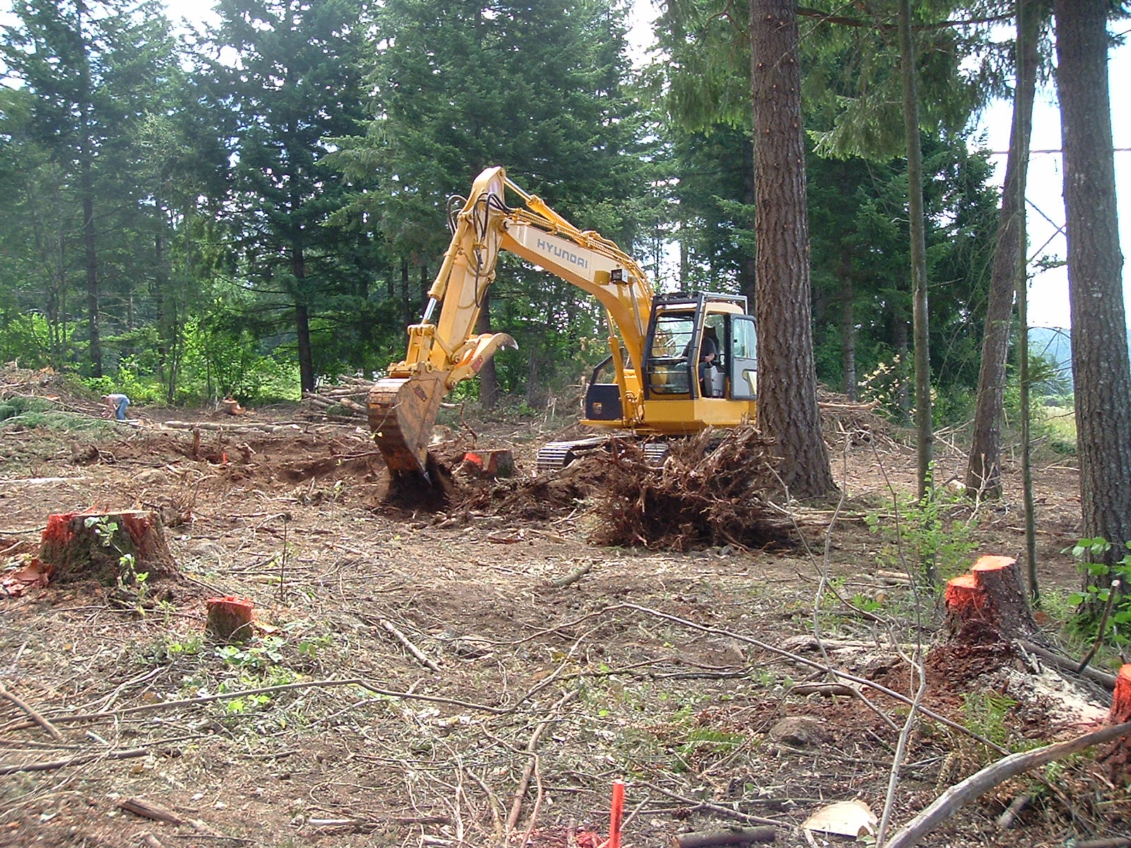 land clearing Harry fox land clearing, land clearing detroit, michigan land clearing contractors,land clearing michigan, texas land clearing,houston land clearing lot land clearing.